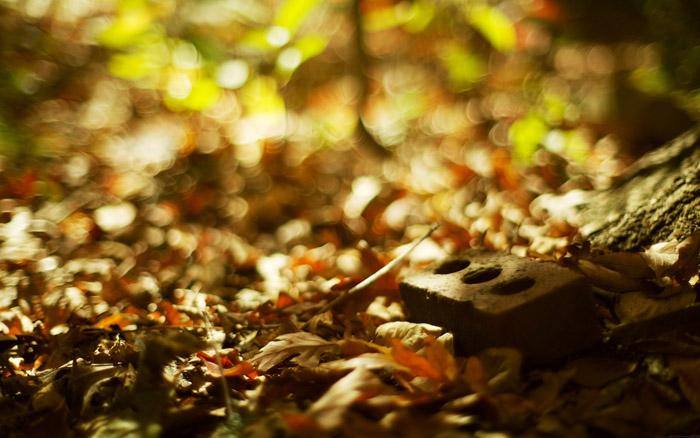 autumn_daydream_desktopsmall.jpg