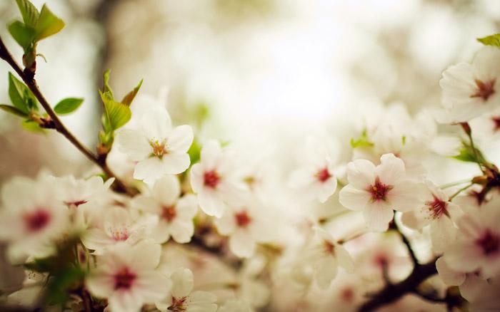 bloom_two_desktops.jpg