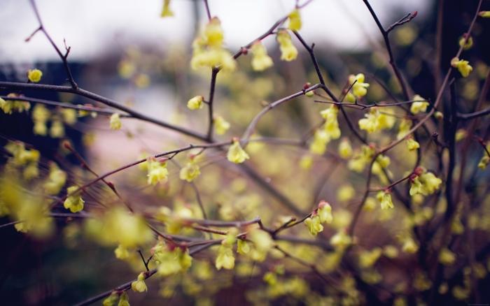 Rising Spring