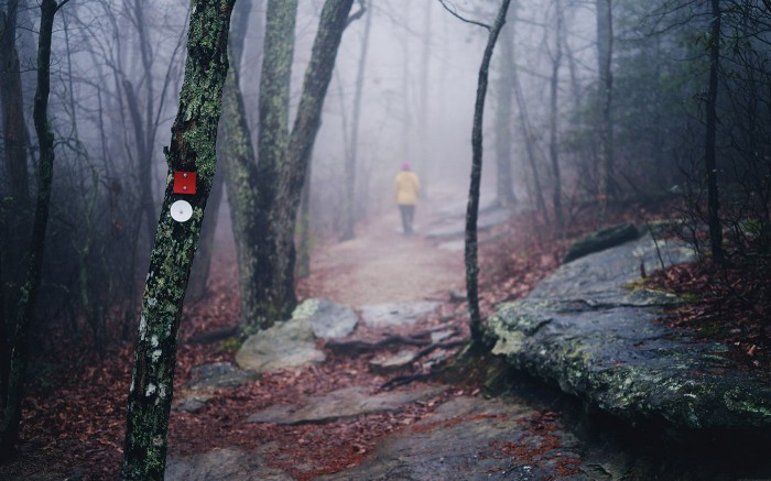 Into Fog