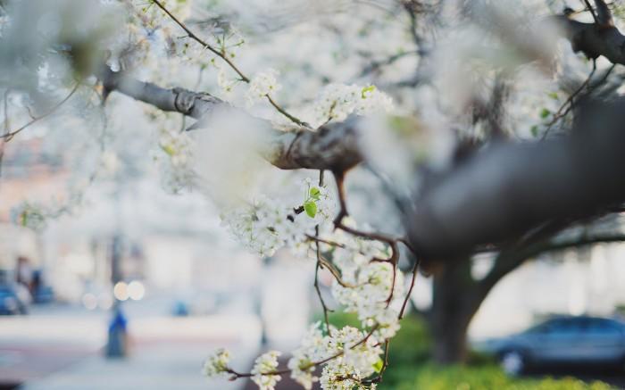 Because Spring