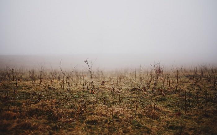 Blue Ridge Fog 3