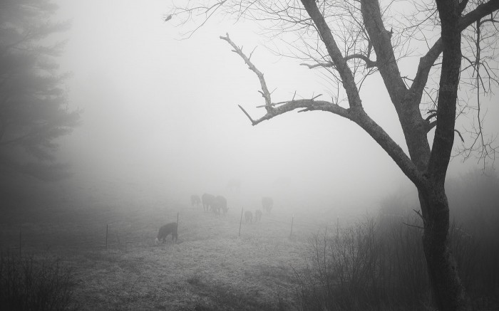 Blue Ridge Fog 4