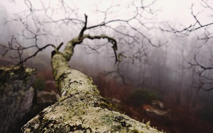 Blue Ridge Fog 5