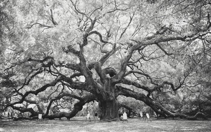 Angel Oak v1