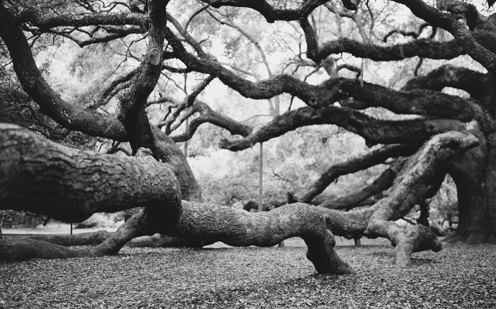 Angel Oak v2