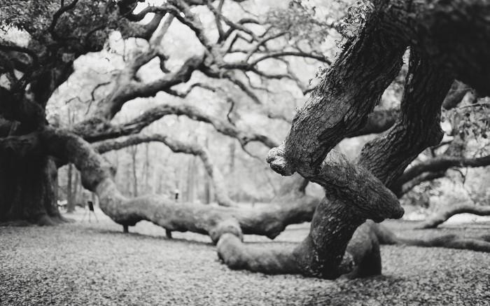 Angel Oak v3