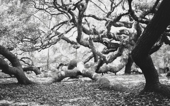Angel Oak v4