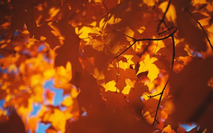 Waning Fall 2