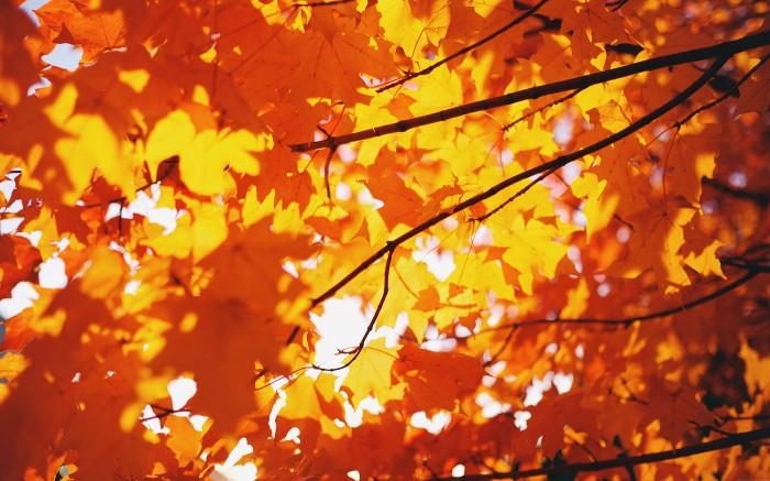 Waning Fall 3