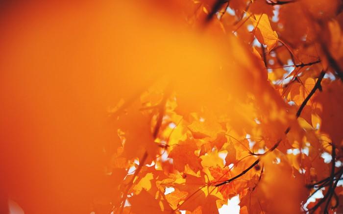 Waning Fall 4