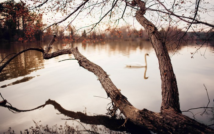 Apres-midi Au Lac